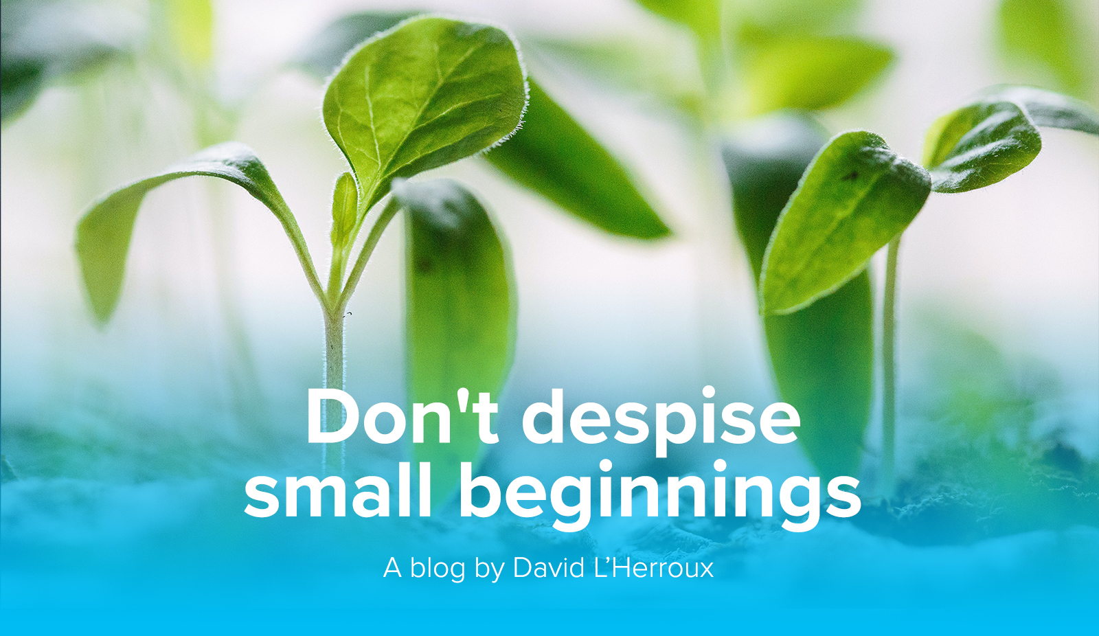 DLH-blog-Smallbeginnings-images